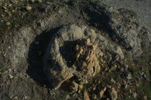גוש קקי, או קיא, חשוב למדי (צילום: Dr. Federico Famiani)