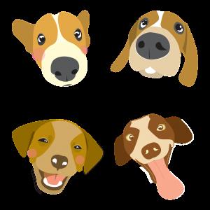 ראשים של כלבים